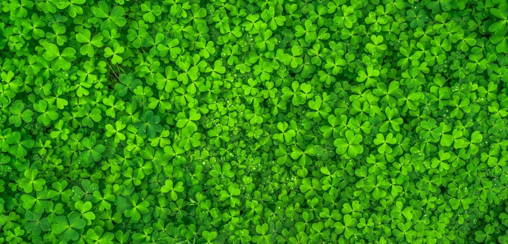 top-view-photo-of-clover-leaves-158780